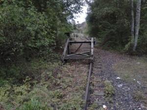 Die verbuschten Gleise der Kanonenbahn im Abschnitt Treysa-Malsfeld im Bereich der alten Gleisanlagen des Bahnhofs Homberg/Efze.